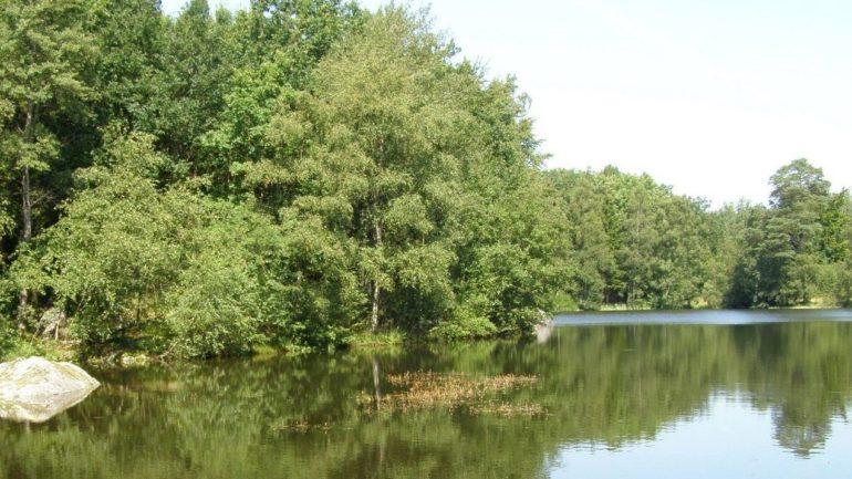 Oplev Store Grankule sø i Almindingen på Bornholm