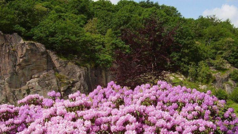 flyt til Bornholm og opleve Ekkodalens smukke blomster og klipper