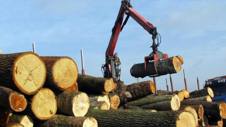 vil du arbejde ude i det fri med skovbrug? flyt til Bornholm og skab dit eget arbejdsliv