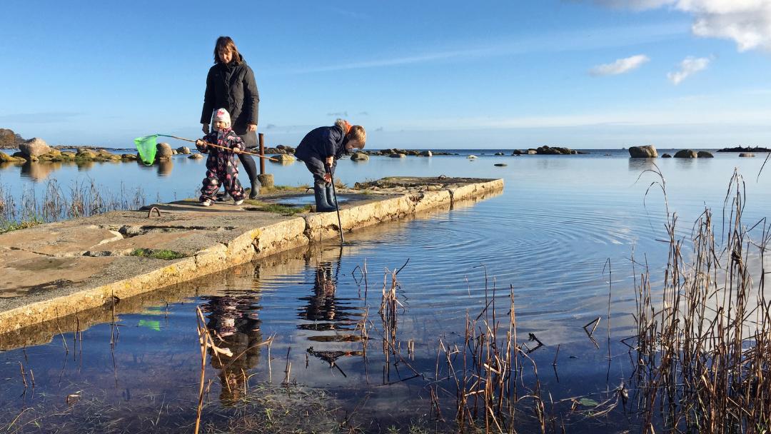 Gule huse ved Hasle Havnefront - hvor vil du helst bo på Bornholm?